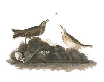 Audubon's Plate 10 Brown Lark Cross Stitch Pattern