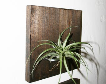 Single (1) Air Plant Holder Wood Wall Mount