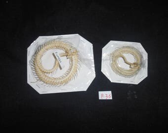 Taxidermy Real Snake Skeleton 2 Pcs