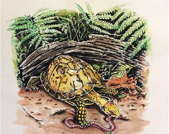 Box Turtle art - original