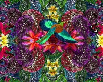 Jeweled African kingfisher - Premium print