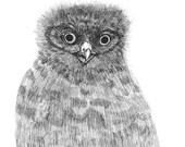 Owlet ORIGINAL ink drawing for inktober 2017 illustration black ink on paper  6 x 6