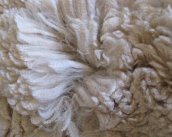 Alpaca Fleece - Beige - Soft and Crimpy - Raw and Unwashed Fiber- 13 ounces - Vito - Free Shipping to U.S.