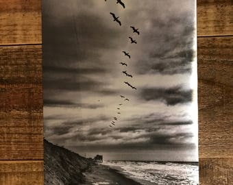 Pelican's perch, Kitty Hawk, Outer Banks, NC 10x7 photo on metal