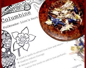 Columbine, dried flowers