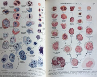 Vintage Medical Book -Textbook of Histology Maximow and Bloom