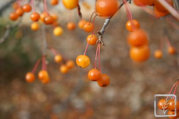 """""""Orange Berries,"""" Indianapolis Museum of Art, Indianapolis, Indiana, 2013."""