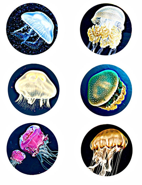 jellyfish sealife ocean nautical collage sheet 3 inch circles digital download animal clipart image graphics printables