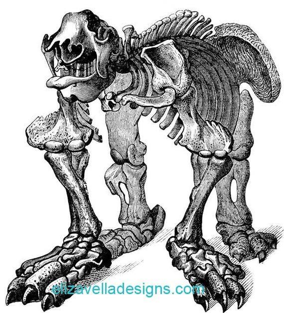 animal anatomy skeleton skull printable art digital download image graphics clipart png clip art vintage science digi stamp digital stamp