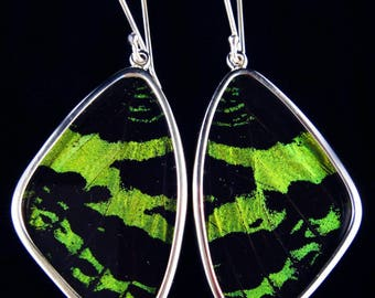 Green Banded Large Butterfly Wing Earrings