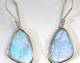 Pearl Blue Morpho Butterfly Wing Silver Dangle Earrings - Small