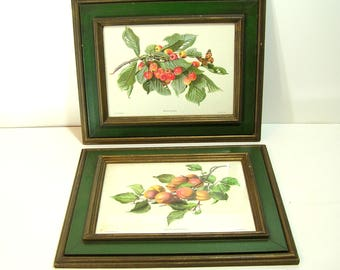 Vintage Framed Fruit Prints Pair Cherries and Peaches