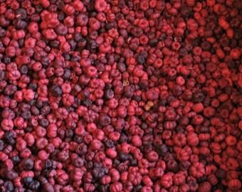 2 Cups Red Putka Pods, unscented, Potpourri, mini pumpkins, bowl filler, dried botanical, fall decor, Red Pumpkin Pods