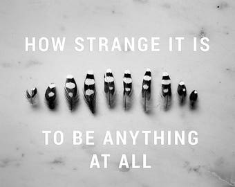 How Strange It Is to Be Anything At All - Art Print - Photograph - 8 x 10 - Neutral Milk Hotel