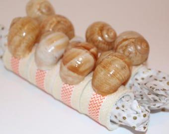 Shells Snail  Napkin Rings Set of 8
