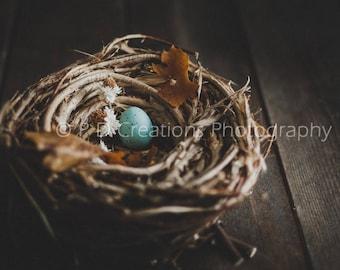Nest with Blue Egg