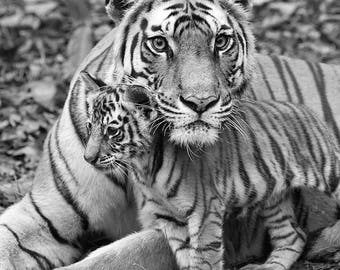 MOM and BABY ANIMAL Photography, Nursery Art Prints, Set of 4 Black and White Photos, Fox, Tiger, Polar Bear, Giraffe, Safari Baby Shower