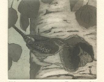 Aspen House Wren Nest, Original Etching