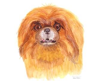 Pekingese dog art print, house pet animal face mugshot picture, illustration, watercolor painting sketchbook art, living room library decor
