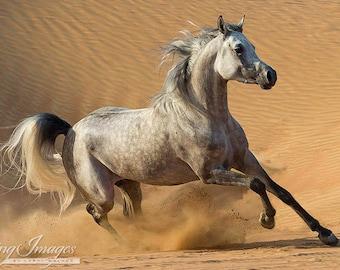 Desert Stallion Runs in the Dunes - Fine Art Horse Photograph - Horse - Fine Art Print