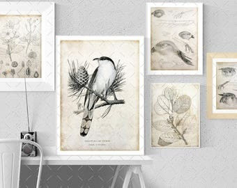 Decoupage, Backgrounds, botanical birds insect vintage papers - scrapbooking ,  Digital Collage Sheets  to Download Tp3
