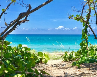 Seascape Art Coastal Decor | Nautical Decor Print | Coastal Photography Print | Blue Sky Turquoise Ocean Greenery Art | Beach House Decor