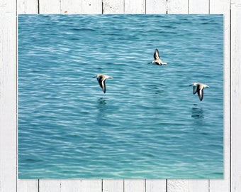 Ocean Print Photography | Turquoise Home Decor Wall Art | Beach Prints Photography | Seagull Wall Art Print | Teal Decor | Teal Wall Art