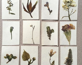 Dollhouse miniature herbarium, real pressed plant album. Set #1 of 12 plants.