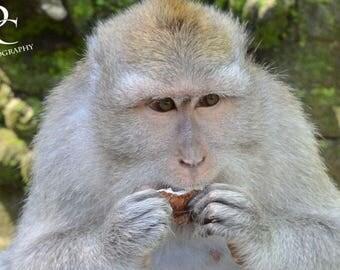 "11x17, Digital Print, ""Balinese Monkey No. 2"""