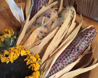 hand dipped Indian corn Beeswax dipped Indian corn Clove scented fall decorations bowl filler fall potpourri farmhouse decor montana made