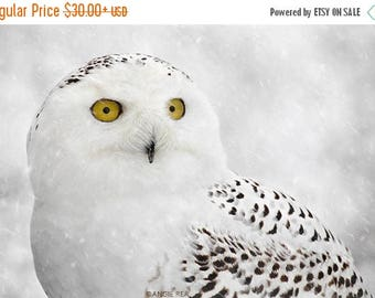 ON SALE Snowy Owl Fine Art Bird Photography, Home Decor Art Print, Bird Wall Art, Nature Print, Owl Decor, White Owl in Winter Snow