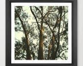 tree photography / Califo...
