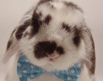 Small pet party bow - bunny rabbit or guinea pig - pastel dots or stripes