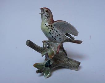 Vintage European Continental Hand painted Porcelain Figurine of Wood Thrush Bird, Turdidae, of passerine birds