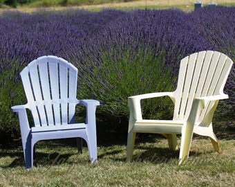 Chairs by the Lavender Field