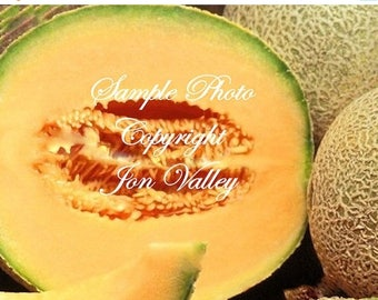 Iroquois Cantaloupe App 50 seeds Sweet Aromatic Melon Early Producer Market Or Home Heirloom 5-7 lbs Sweet Flavor