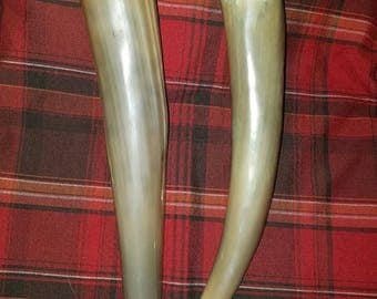 Plain Drinking Horns
