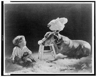 Early 1900's, Amusing photo, Dog, Chicken on Dog's Head and Boy looking on