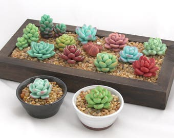 Potted Fake Succulents