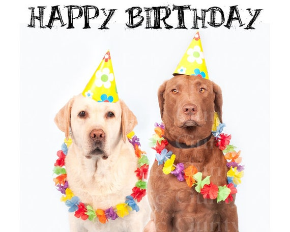 Hawaiian Luau Dogs Happy Birthday - Edible Cake and Cupcake Topper For Birthdays and Parties! - D22872