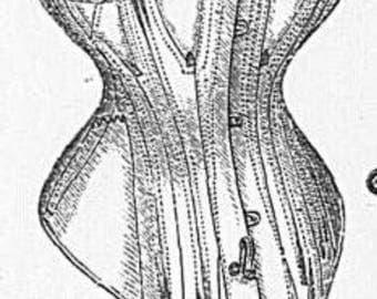 RESERVED for Aqueue 1876 corset second installment
