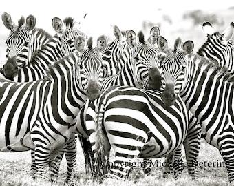 Zebra Profile Digital ...