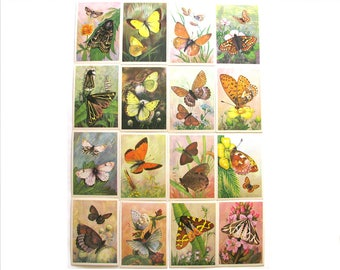 Butterflies, Set of 16 Soviet Unused Postcards, Kinds of Butterflies, Insects, Russian, Illustration, Aristov, USSR, 1982