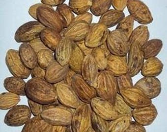 Harad (Haritaki) herb Whole / Terminalia chebula Whole / Indian herbs 100gms ( 3.5 oz ) Free Shipping