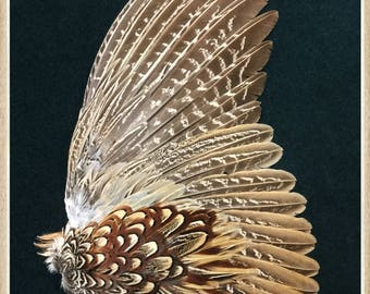 Pheasant wing from a ringneck rooster pheasant, pheasant feathers, wing feathers #65