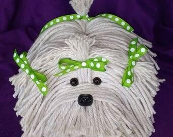 Lhasa Apso- Havanese - Shih Tzu - Maltese - Mop Puppy  Bichon - White Dog - Schnauzer - Coton De Tulear - Terrier - Lowchen - Pound  Puppy
