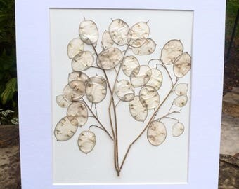 FREE SHIP  Real Pressed Flower Botanical Art Herbarium of Lunaria Money Plant 11 x 14 OR 14x16