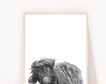 Highland Calf Print, Highland Cow, Highland Cattle, Baby Cow,  Printable Art, Instant Download, Modern Wall Art, Home Decor, Wall Decor