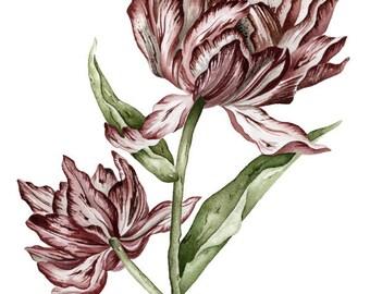 Botanical Striped Tulip
