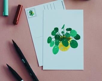 Pilea Peperomioides A6 Postcard